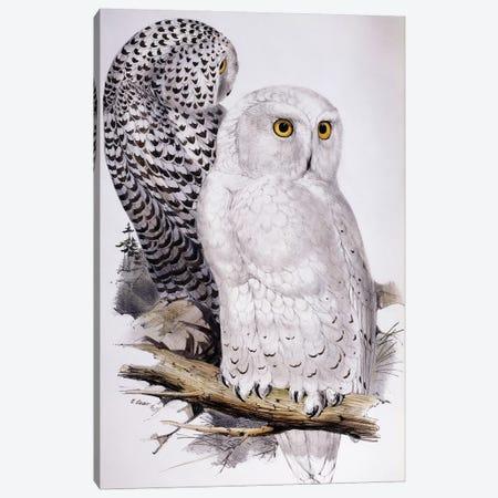 Snowy Owl, 1832-1837  Canvas Print #BMN10126} by Edward Lear Canvas Art Print