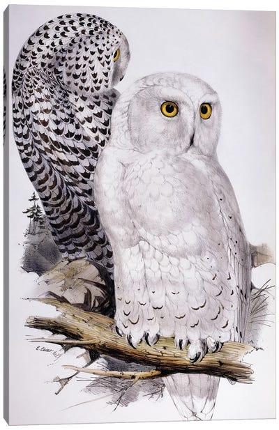 Snowy Owl, 1832-1837  Canvas Art Print