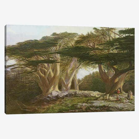 The Cedars of Lebanon, 1861  Canvas Print #BMN10128} by Edward Lear Canvas Artwork
