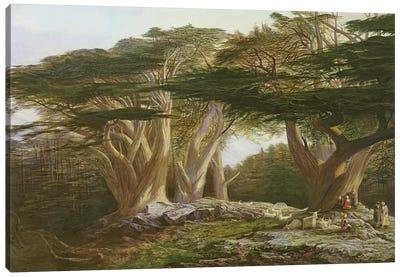 The Cedars of Lebanon, 1861  Canvas Art Print