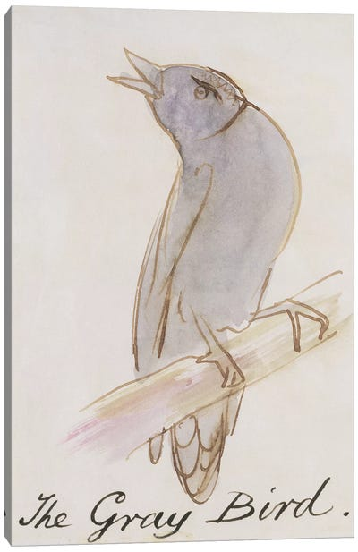 The Gray Bird, from 'Sixteen Drawings of Comic Birds'  Canvas Art Print