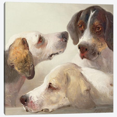 A Study of Hounds  Canvas Print #BMN10146} by Edward Robert Smythe Art Print
