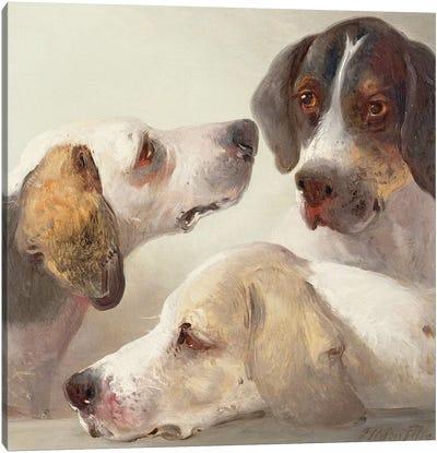 A Study of Hounds  Canvas Art Print