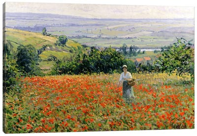 Woman in a Poppy Field  Canvas Art Print