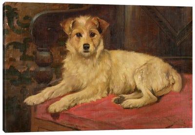 A Terrier on a Settee Canvas Art Print