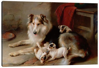 A Collie with Fox Terrier Puppies, 1913 Canvas Art Print