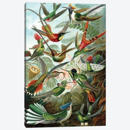 Example from the family Trochilidae, 'Kunstformen der Natur', 1899  Canvas Print #BMN10218} by Ernst Haeckel Canvas Art