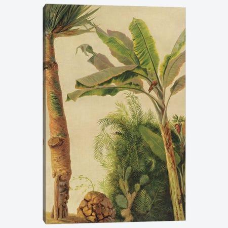 Banana Tree, c.1865  Canvas Print #BMN10285} by Frederic Edwin Church Canvas Art