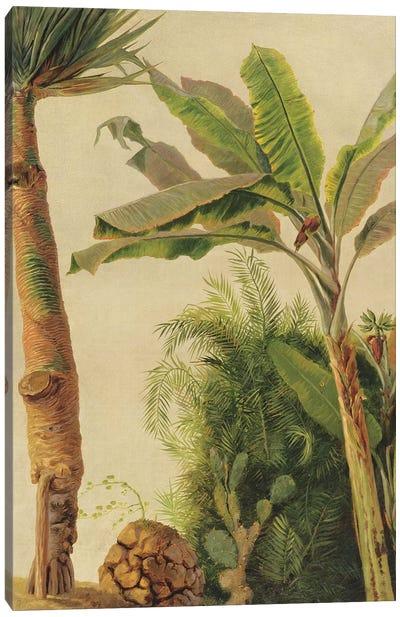 Banana Tree, c.1865  Canvas Art Print