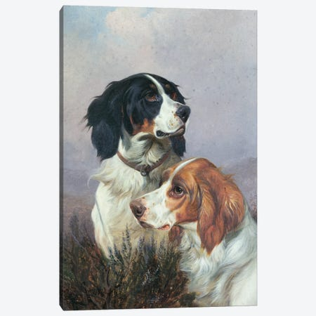 Setters on a Moor, 1892 Canvas Print #BMN1032} by Colin Graeme Canvas Art Print