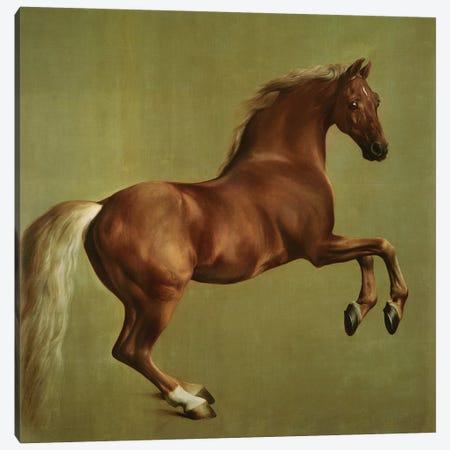 """Whistlejacket"", 1762 Canvas Print #BMN10348} by George Stubbs Canvas Artwork"
