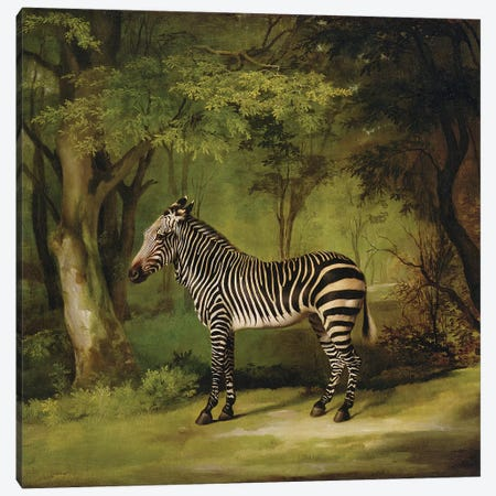 A Zebra, 1763  Canvas Print #BMN10349} by George Stubbs Canvas Wall Art