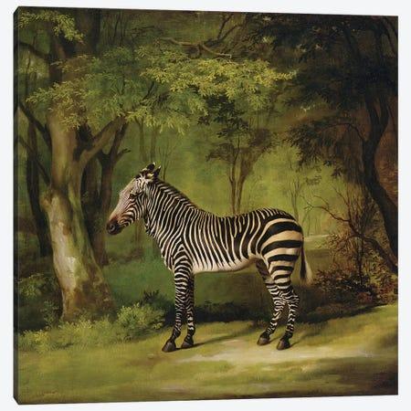 A Zebra, 1763  Canvas Print #BMN10349} by George Stubbs Canvas Wall Art