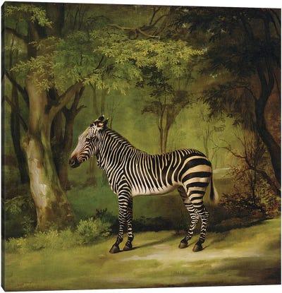 A Zebra, 1763  Canvas Art Print