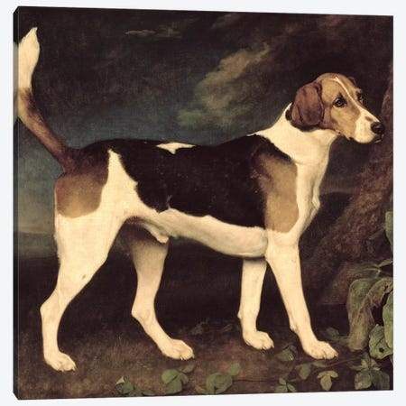 Ringwood, a Brocklesby Foxhound, 1792  Canvas Print #BMN10350} by George Stubbs Canvas Art Print