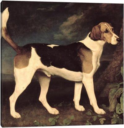 Ringwood, a Brocklesby Foxhound, 1792  Canvas Art Print