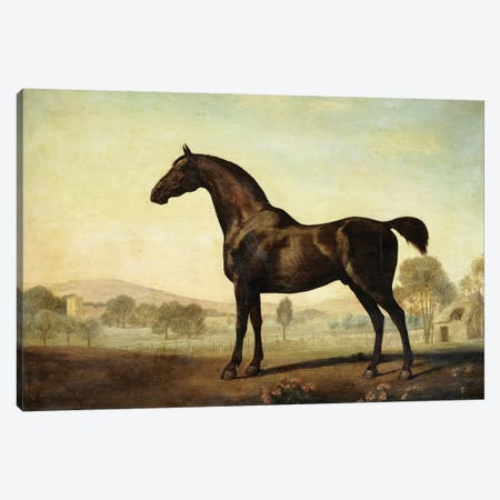 Sweetwilliam', a Bay Racehorse, in a Paddock, 1779  Canvas Print #BMN10351} by George Stubbs Art Print