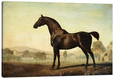 Sweetwilliam', a Bay Racehorse, in a Paddock, 1779  Canvas Art Print