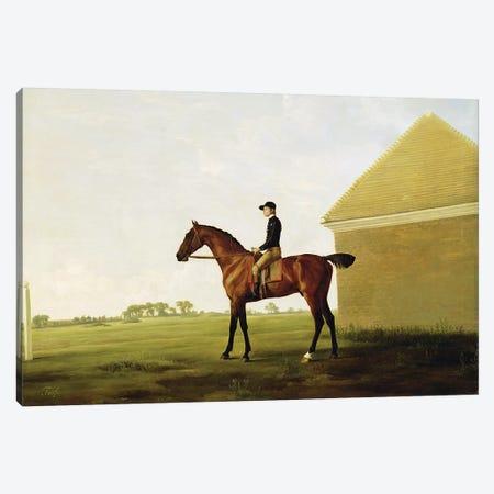 Turf, c.1765   Canvas Print #BMN10355} by George Stubbs Canvas Artwork