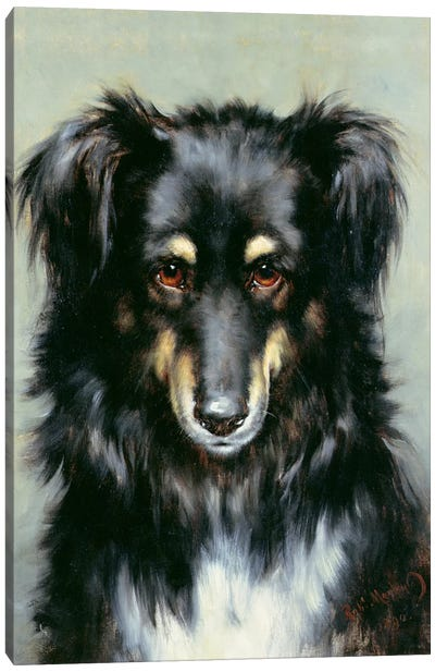 A Black and Tan Collie, 1890  Canvas Art Print