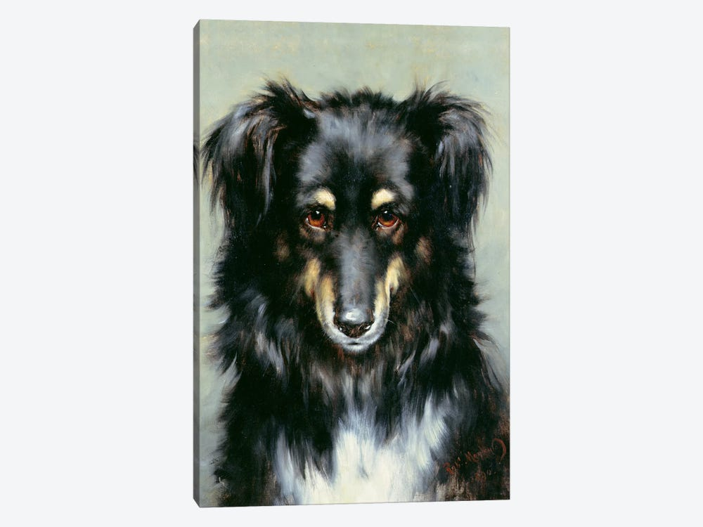 A Black and Tan Collie, 1890  by Robert Morley 1-piece Art Print