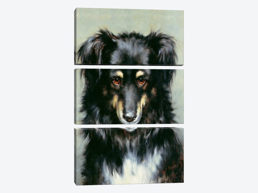 A Black and Tan Collie, 1890  by Robert Morley 3-piece Canvas Print