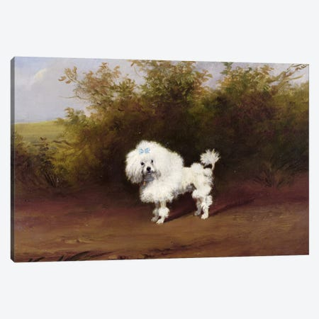 A Toy Poodle in a Landscape  Canvas Print #BMN1037} by Frederick French Canvas Wall Art