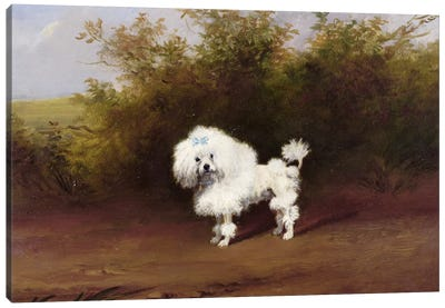 A Toy Poodle in a Landscape  Canvas Art Print