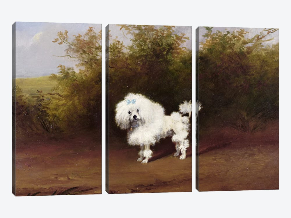 A Toy Poodle in a Landscape  by Frederick French 3-piece Canvas Art Print