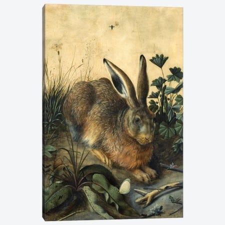 Hare  Canvas Print #BMN10474} by Hans Hoffmann Canvas Print