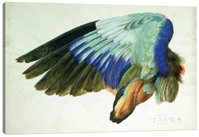 The Right Wing of a Blue Roller  copy of an original by Albrecht Durer of 1512, 1524   Canvas Art Print