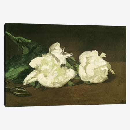 Branch of White Peonies and Secateurs, 1864  Canvas Print #BMN1050} by Edouard Manet Canvas Art Print
