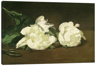 Branch of White Peonies and Secateurs, 1864  Canvas Art Print