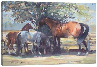 Horses - Summer Flies, 1990  Canvas Art Print