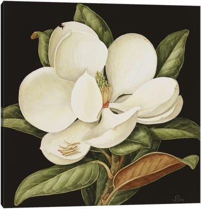 Magnolia Grandiflora, 2003  Canvas Art Print