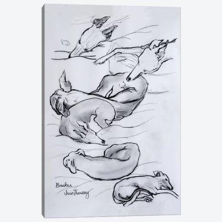 Bracken, the whippet, 2000,  3-Piece Canvas #BMN10570} by Joan Thewsey Art Print