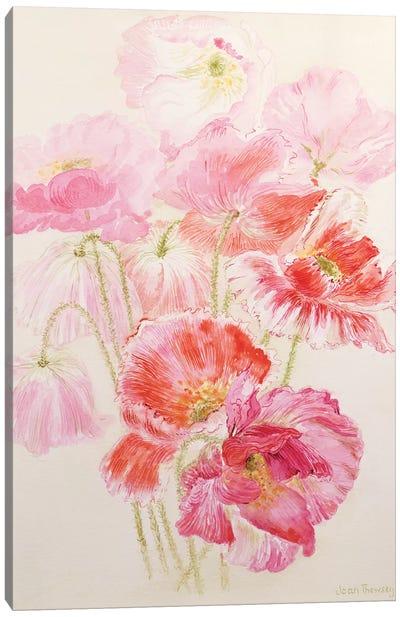 Shirley Poppies  Canvas Art Print