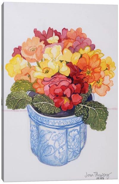 The Multicoloured Primrose 2011  Canvas Art Print