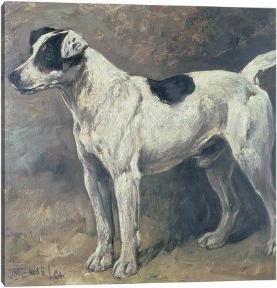 A Jack Russell, 1891 Canvas Art Print