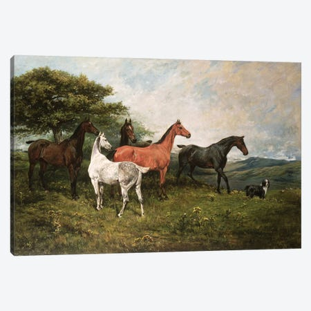 Mares and Foal with a Sheepdog Canvas Print #BMN10690} by John Emms Canvas Art