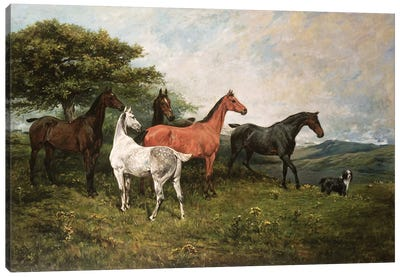 Mares and Foal with a Sheepdog Canvas Art Print