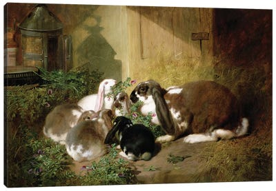 A lop-eared doe rabbit with her young Canvas Art Print