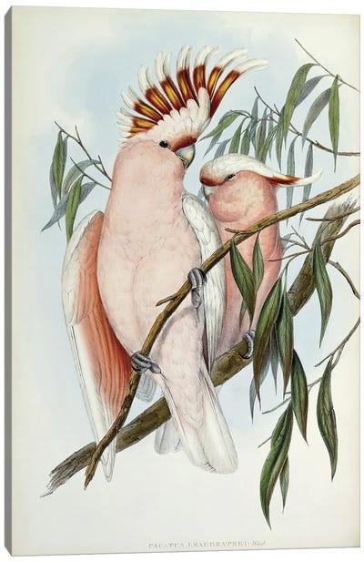 Cacatua Leadbeateri, 1848-1869  Canvas Art Print
