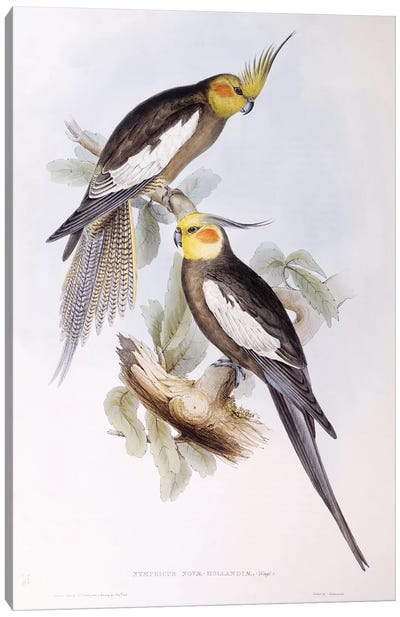Cockatiel , Engraving by John Gould Canvas Art Print