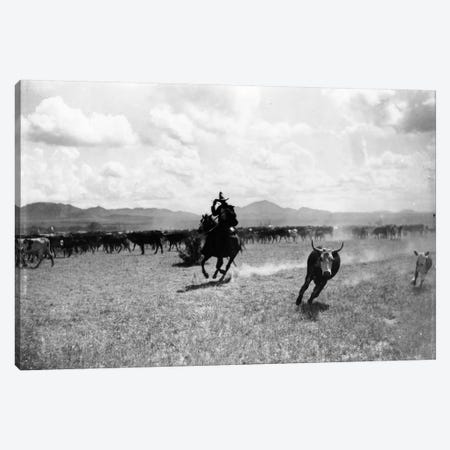 Raguero cutting out a cow from the herd  Canvas Print #BMN1071} by Dane Coolidge Canvas Print