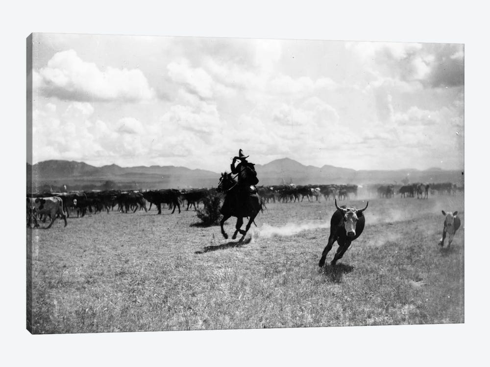 Raguero cutting out a cow from the herd  by Dane Coolidge 1-piece Canvas Print