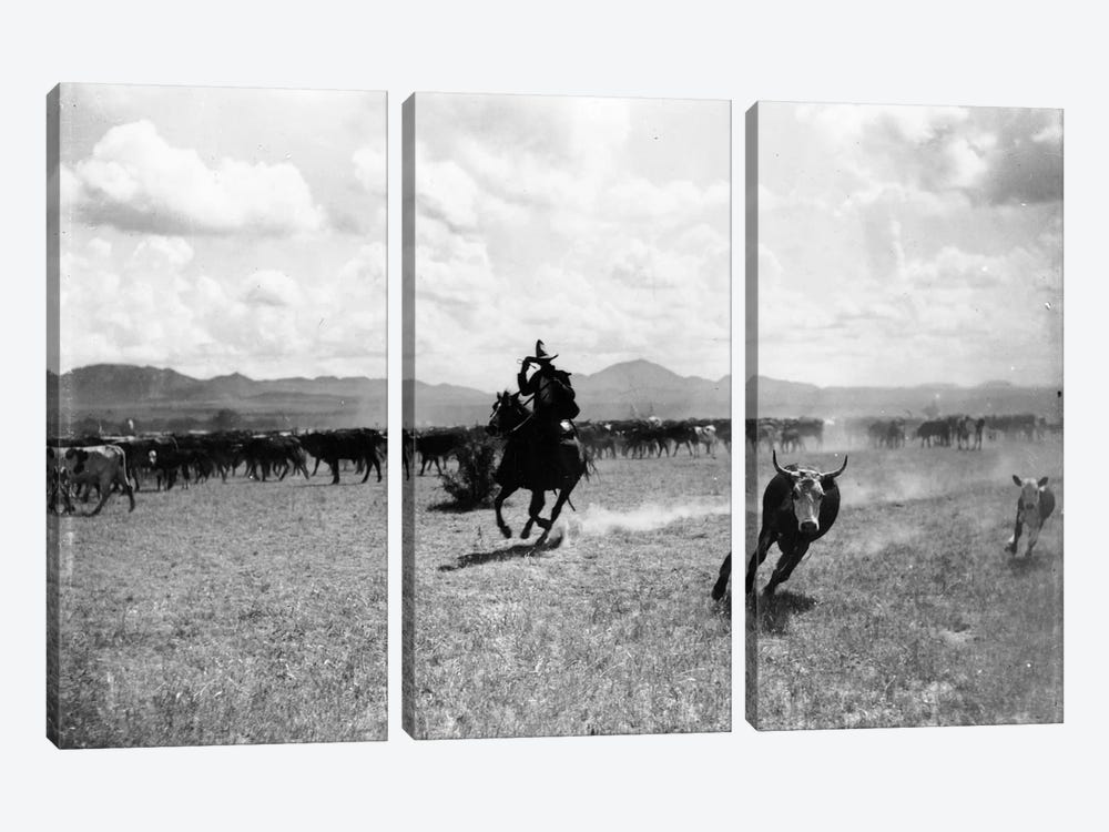 Raguero cutting out a cow from the herd  by Dane Coolidge 3-piece Art Print