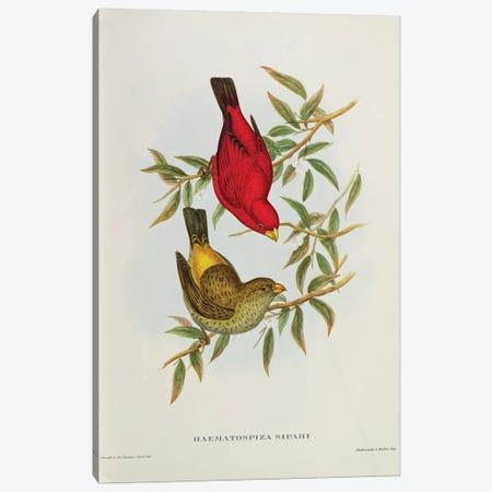 Haematospiza Sipahi, illustration from 'Birds of Asia', Vol. I, Parts I-VI,by John Gould, 1850-54  Canvas Print #BMN10722} by John Gould Canvas Art
