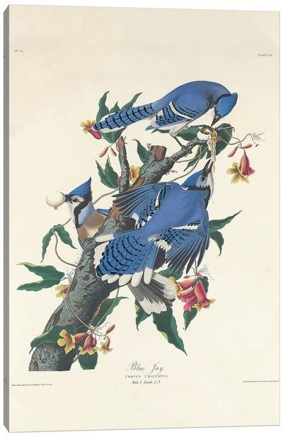 Blue Jay, 1831  Canvas Art Print