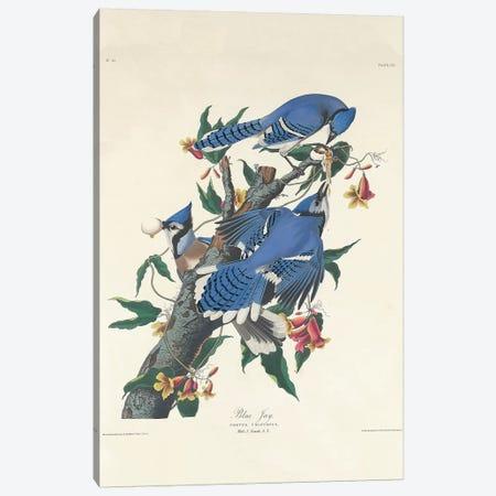 Blue Jay, 1831  Canvas Print #BMN10739} by John James Audubon Canvas Art Print